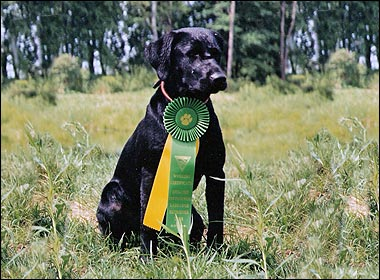 Retriever training forum events
